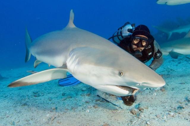 St. Maarten duiken